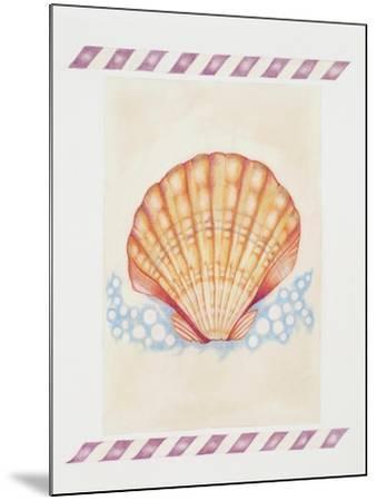 Shell Cardita-Deborah Kopka-Mounted Giclee Print