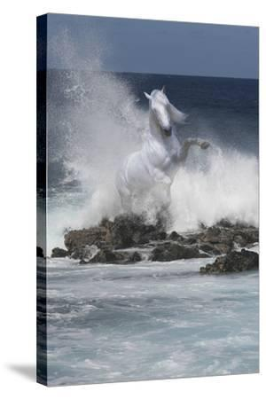 Spirit of the Sea-Bob Langrish-Stretched Canvas Print