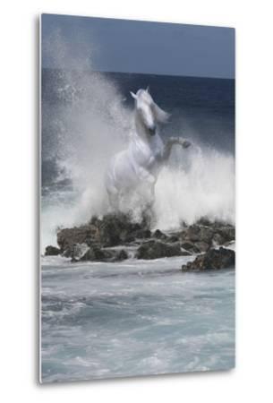 Spirit of the Sea-Bob Langrish-Metal Print