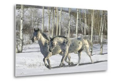 Winter Wonderland-Bob Langrish-Metal Print