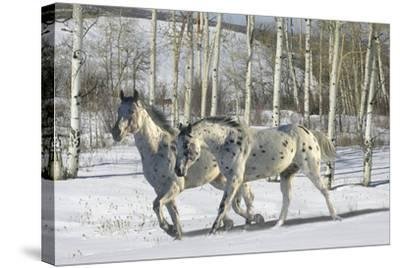 Winter Wonderland-Bob Langrish-Stretched Canvas Print