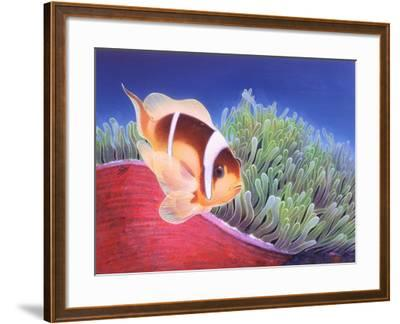 Clown Fish-Durwood Coffey-Framed Giclee Print