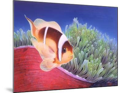 Clown Fish-Durwood Coffey-Mounted Giclee Print