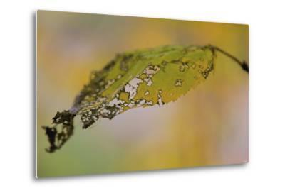 Leaf-Gordon Semmens-Metal Print