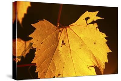 Leaf-Gordon Semmens-Stretched Canvas Print