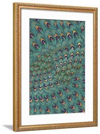 Peacock Feathers-FS Studio-Framed Giclee Print
