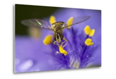 Flower, Bee-Gordon Semmens-Metal Print