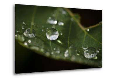 Raindrop on Leaf-Gordon Semmens-Metal Print