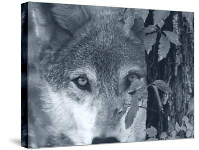At First Sight-Gordon Semmens-Stretched Canvas Print
