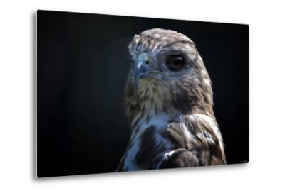 Hawk-Gordon Semmens-Metal Print