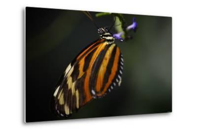 Butterfly-Gordon Semmens-Metal Print
