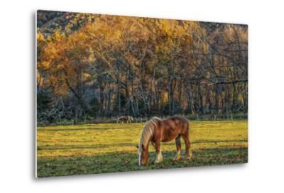 Cades Cove Horses at Sunset-Galloimages Online-Metal Print