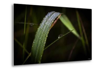Blade of Grass with Dew Drops-Gordon Semmens-Metal Print