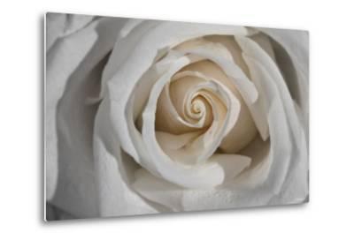 Rose-Gordon Semmens-Metal Print