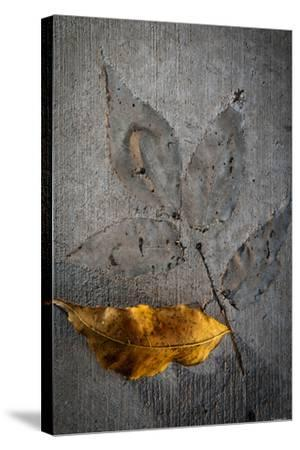 Cement Autumn 1295-Gordon Semmens-Stretched Canvas Print