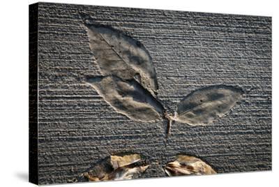 Cement Autumn 1335-Gordon Semmens-Stretched Canvas Print