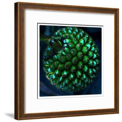 Pod of Seeds-Harold Silverman-Framed Giclee Print
