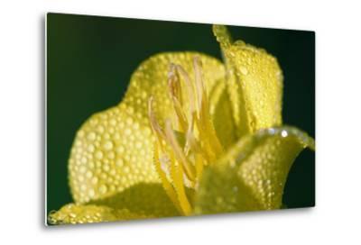 Flower-Gordon Semmens-Metal Print