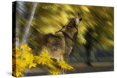 Howling Wolf-Gordon Semmens-Stretched Canvas Print
