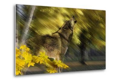 Howling Wolf-Gordon Semmens-Metal Print