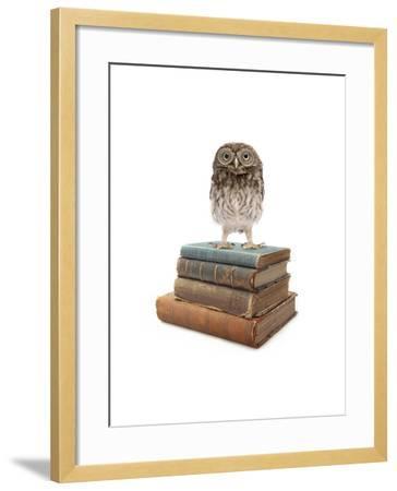 Owl and Books-J Hovenstine Studios-Framed Giclee Print