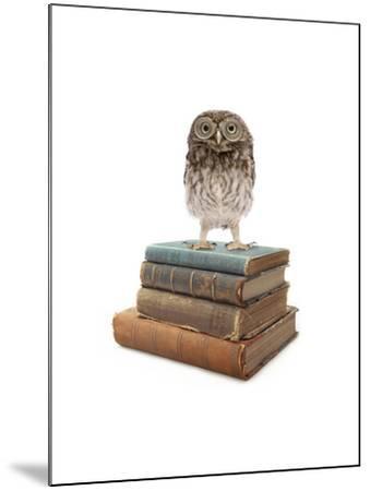 Owl and Books-J Hovenstine Studios-Mounted Giclee Print