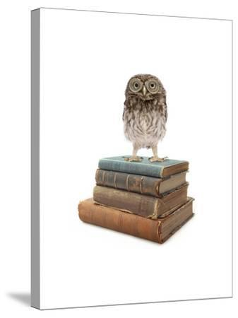 Owl and Books-J Hovenstine Studios-Stretched Canvas Print