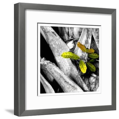 Tree Bark W - Leaves-Harold Silverman-Framed Giclee Print