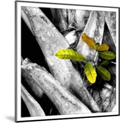 Tree Bark W - Leaves-Harold Silverman-Mounted Giclee Print