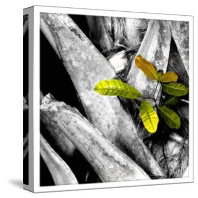Tree Bark W - Leaves-Harold Silverman-Stretched Canvas Print