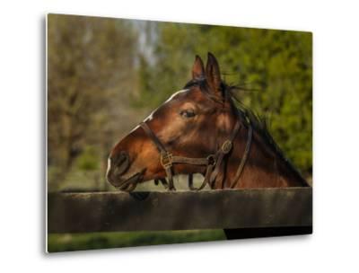 Horse Portrait-Galloimages Online-Metal Print