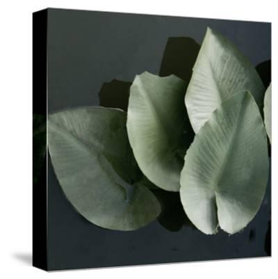 Lilies in a Grouping-Harold Silverman-Stretched Canvas Print