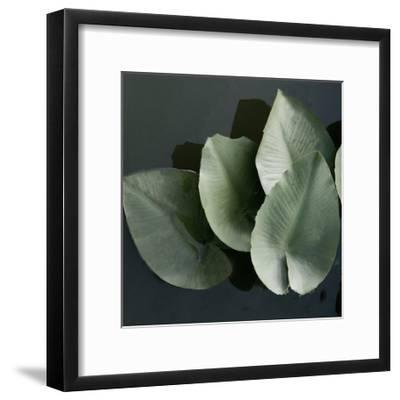 Lilies in a Grouping-Harold Silverman-Framed Giclee Print