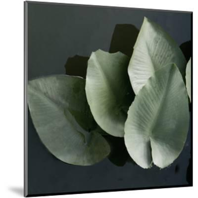 Lilies in a Grouping-Harold Silverman-Mounted Giclee Print