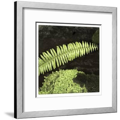 As the Leaf Is Long-Harold Silverman-Framed Giclee Print