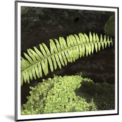 As the Leaf Is Long-Harold Silverman-Mounted Giclee Print