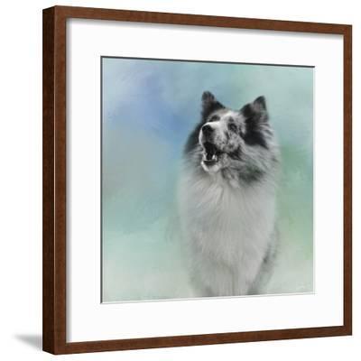 Something to Say Sheltie-Jai Johnson-Framed Giclee Print