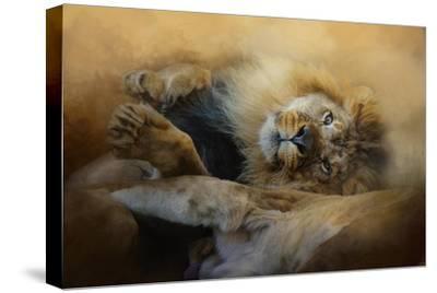 Lion Love 2-Jai Johnson-Stretched Canvas Print