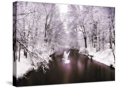 Peace on Earth-Jessica Jenney-Stretched Canvas Print