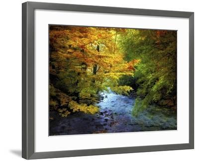 River View-Jessica Jenney-Framed Giclee Print