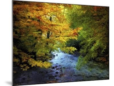 River View-Jessica Jenney-Mounted Giclee Print