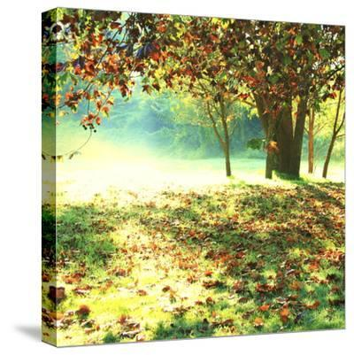 Colourful Morning-Incredi-Stretched Canvas Print