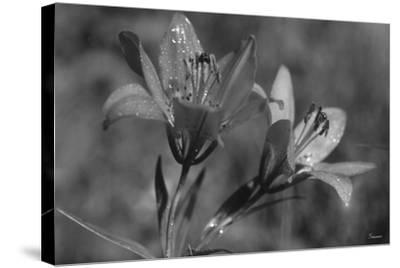 Wildflowers 3-Gordon Semmens-Stretched Canvas Print