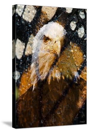 American Bald Eagle I-Gordon Semmens-Stretched Canvas Print