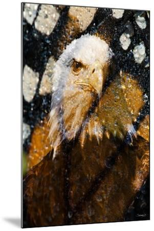 American Bald Eagle I-Gordon Semmens-Mounted Giclee Print