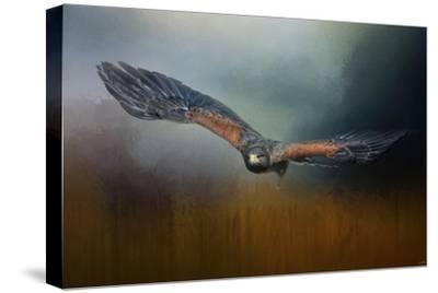 Flight of the Harris Hawk-Jai Johnson-Stretched Canvas Print
