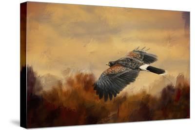 Harris Hawk in Autumn-Jai Johnson-Stretched Canvas Print