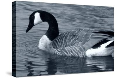 S Goose-Gordon Semmens-Stretched Canvas Print
