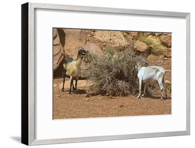 Monument Valley 17-Gordon Semmens-Framed Premium Photographic Print