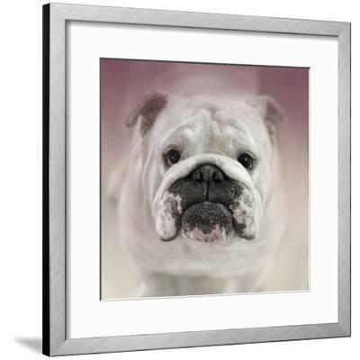 Got Treat Bulldog Puppy-Jai Johnson-Framed Giclee Print